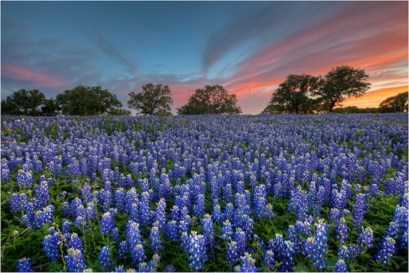 Texas-Bluebonnets-in-San-Saba-County-Spring-Evening-2-Texas-Wildflower-Images.jpg
